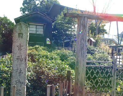 Hiyoshi02_1